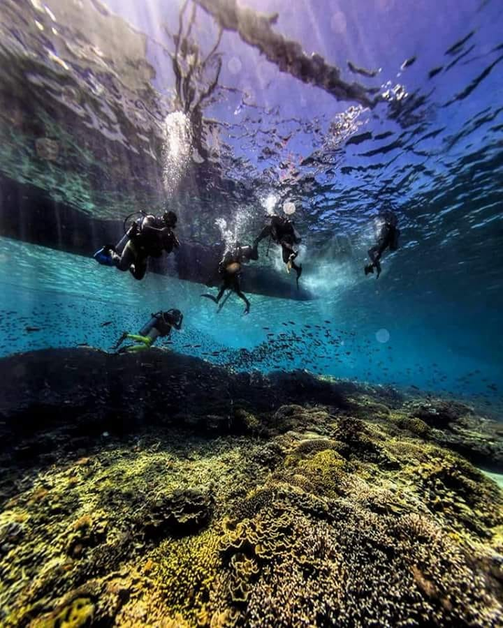 Corsi sub immersioni Anzio Nettuno   Con esperienza ventennale offriamo corsi con rilascio di certificazioni internazionali SSI (Scuba School International)